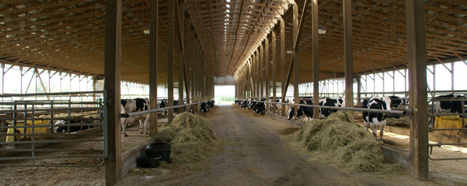 Dairy Farms in Ontario and Quebec